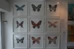 Emma Wilson Troy 9 Butterflies